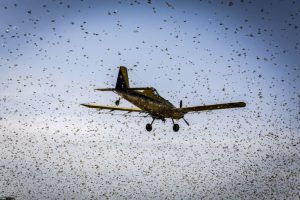 Using Aircraft to Fight Desert Locusts - Photo FAO