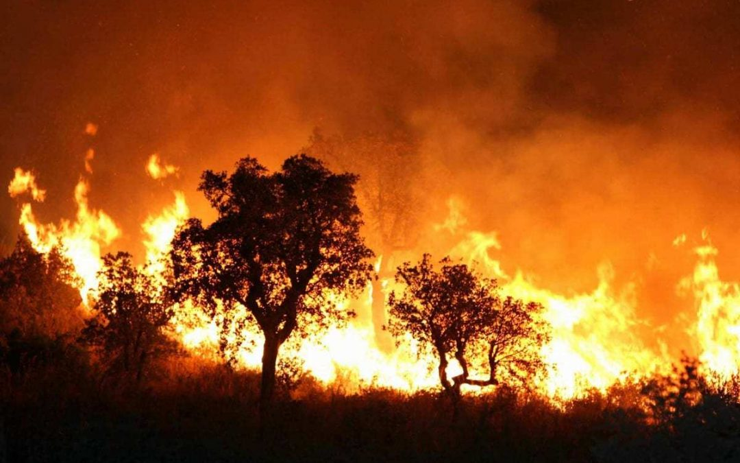 37 Arson Fires - Photo Middle East Monitor