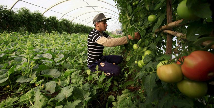 Algerian Farmers Growing More Food at Home - Photo Jordan Times