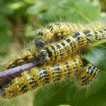 Caterpillars - Photo NatureSpot