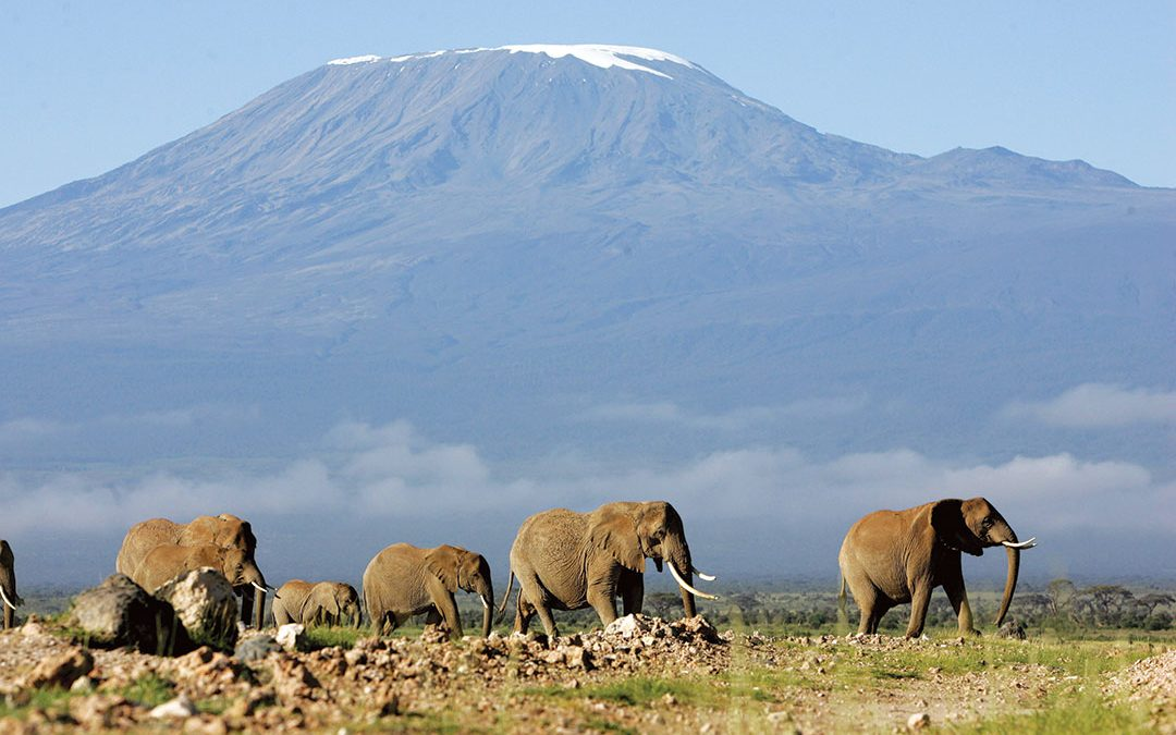 Elephants at the Foot of Mount Kilimanjaro - Photo Africa Defense Forum
