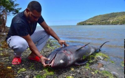 Mozambique: Probe into Dead Dolphins