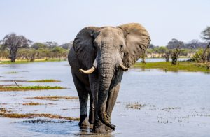 Botswana's Environment Ministry Pursues Probe on Elephant Deaths - Photo The Journal