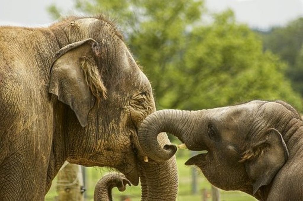 Elephants Getting to the Point of Pointing - Photo Euro Weekly News