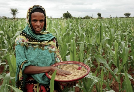 Ethiopian Female Farmers Stand to Gain the Most - African Business Community