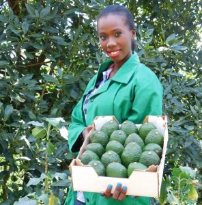 Kenyan Avocadoes Coming to a Place Near London - Photo Hortinews