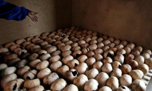 Skulls of Genocide Victims - Photo The Guardian