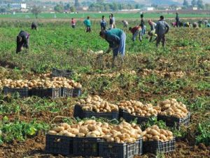 Algeria Not Yet Growing Enough Food to Feed its People - Photo Farmland Grab