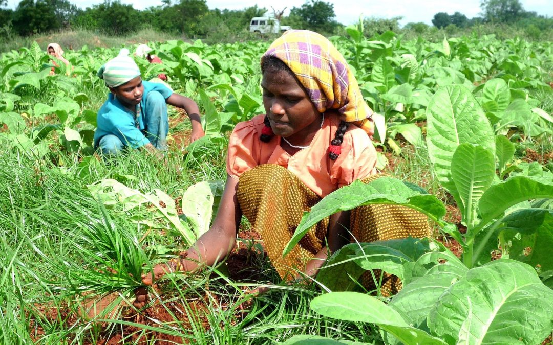 Malawi: Calls to Move Away from Tobacco